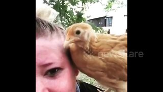 Chicken shocks owner by pecking her eye at Virginia home