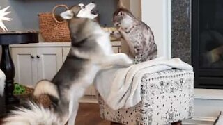 Dog cheats to win fight with cat!