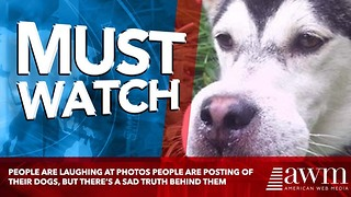 People Are Laughing At Photos People Are Posting Of Their Dogs, But There's A Sad Truth Behind Them - Video