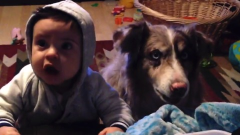 This Dog Can Speak! And You'll Never Guess What He Says...