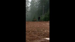 Hunting deer with a spear