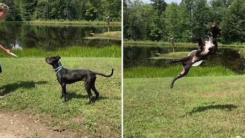 Ruff day! Doting owner films hilarious slow-mo of dog trying to catch frisbee