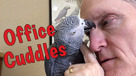 Parrot And Owner Share Incredibly Trusting Relationship
