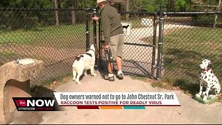 Dog owners on alert after raccoon with deadly virus found at popular Pinellas park - Video
