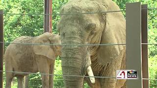 ZOOSDAY: Elephants - Video