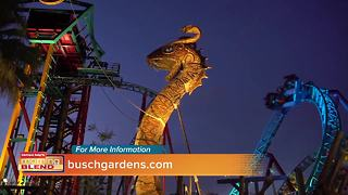 Busch Gardens - Video
