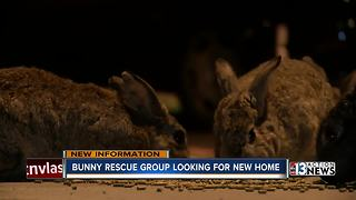 Preliminary results show dead bunnies had cracked ribs - Video