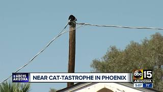 Cat saved from power pole in Phoenix