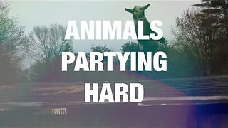Animals Dancing in an Adorable Way - Video