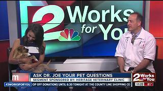 Dr. Joe visits 2 Works for You to answer pet health questions