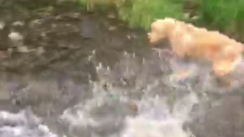 Playful Dog Becomes Terrified Of Large Salmon