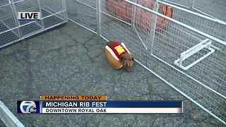 Wiener Dog Racing at the Michigan Rib Fest - Video