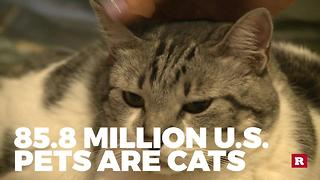 The most popular pets in the U.S. | Rare Animals - Video