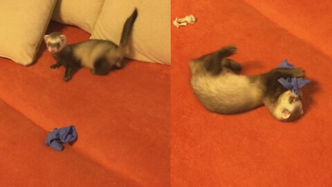 Funny pet ferret wildly plays with a rubber glove