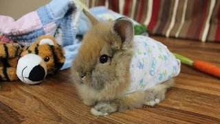 Bunny in Pajamas Is the Cutest Thing You'll See Today - Video