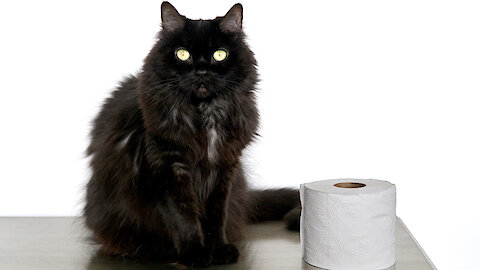 Watch This Kitty Take On The Toilet Paper Challenge