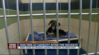 Fireworks, holiday chaos responsible for spike in lost dogs