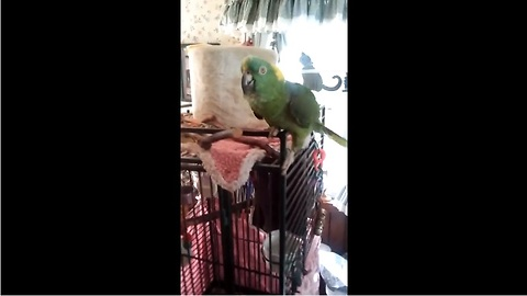 Singing, Talking, Crying... This Parrot Can Do It All. You Won't Believe How Talented He Really Is.