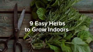 9 easy herbs to grow indoors