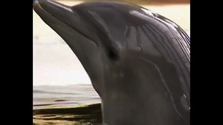 Adorable Baby Dolphin - Video