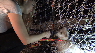 Loreta Frankonyte and Eldad Hagar rescuing a puppy in the L.A river! - Video