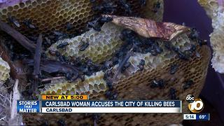 Carlsbad woman says the city is killing bees - Video