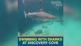 You can now swim with sharks at Discovery Cove - Video