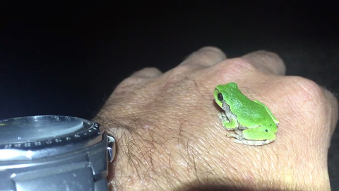Baby tree frog seeks human warmth on frosty night