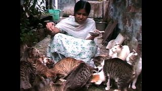 50 Cats Share One Room - Video