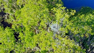 Drone view of mother heron guarding her nest high - Video