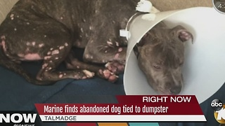 Marine finds abandoned dog tied to Dumpster