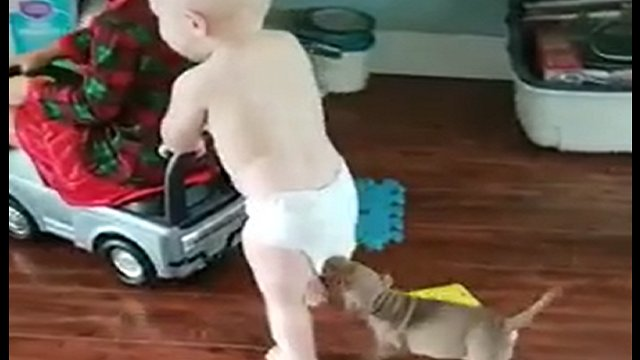 Puppy plays tug-of-war with toddler's diaper