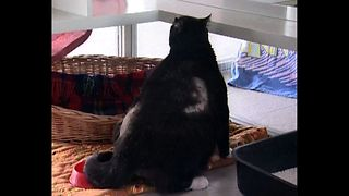 41-Pound Cat - Video