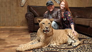 'We Live With 220 Lions And Tigers': BEAST BUDDIES - Video
