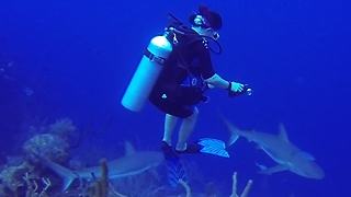 Divers put in danger when surrounded by hungry sharks - Video