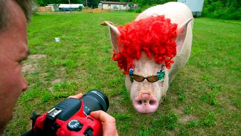 Esther the micro pig becomes esther the wonder pig! – Shes definitely a babe!