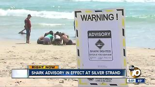 Shark Advisory in effect in Silver Strand - Video