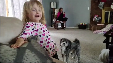 Puppy and toddler battle for toy supremacy