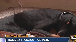 Watch out for these holiday hazards for your pets - Video