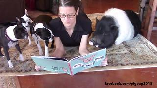 Pets gather around owner for story time - Video