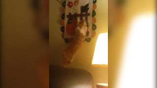 Kitten Takes A Leap of Faith - Video