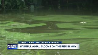Harmful algal blooms found in Java Lake - Video