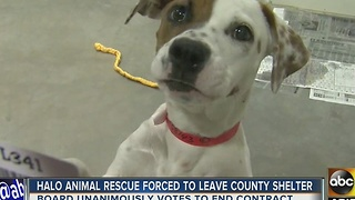 HALO animal rescue forced to leave building, needs to move animals - Video