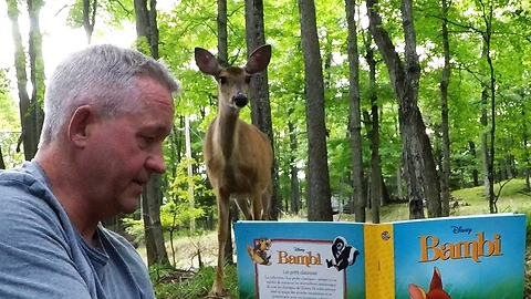 Wild Deer Enjoy Storytelling In The Forest