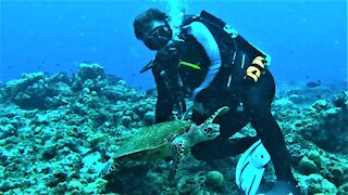 Baby sea turtle swims straight to scuba diver to hang out with him