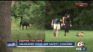 Unleashed dogs are a safety concern - Video
