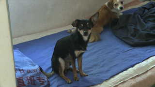 Rogue Cop Rescues Doomed Dogs - Video