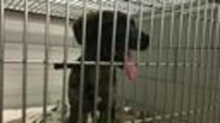 MACC Gives Safe, Free Rides Home For Lost Pets On 4th Of July - Video