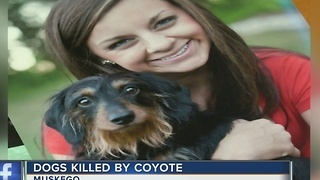 Muskego family warns community after coyote kills two dogs - Video