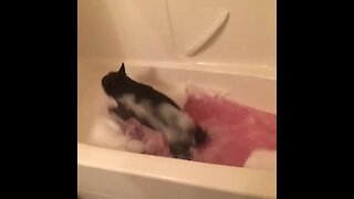 Ecstatic dog can't stop running & jumping for bath time